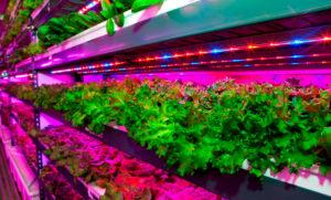 Высокоэффективные комплексные решения в области агропромышленности